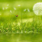 fototapeta wiosenna z motywem kwiatowym